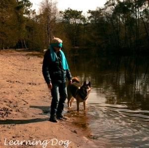 Namid Learning Dog