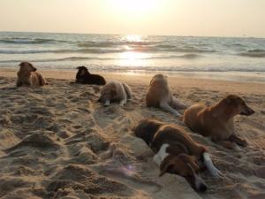 Stray dogs beach