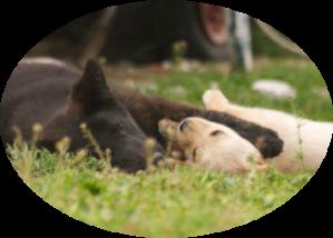 Cani affiliativi