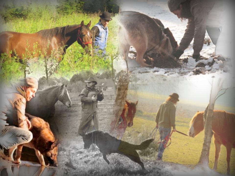 Collage animality